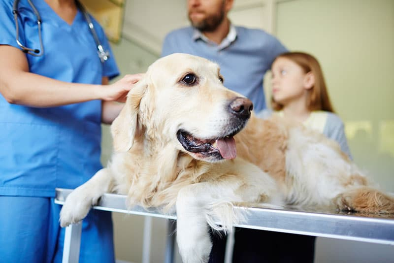 How is a Vet Clinic Any Different from a Vet Hospital?